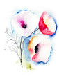 Quadro Poppy flowers