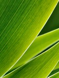 Green leafs in abstract zen style as background