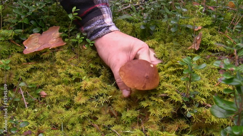 Man found boletus mushroom in the forest