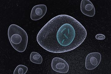 DNA Nucleus Organic Cells