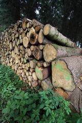 Baumstammstapel im Wald