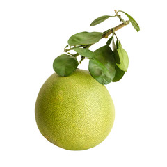Pomelo or Chinese grapefruit