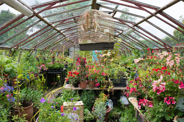 Colourful greenhouse full of potted plants