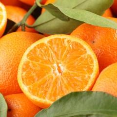 Cross section of tangerine.