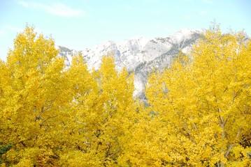カナディアンロッキー バンフの黄葉