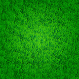 Fototapety Green grass background