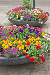 Decoration of summer flowers in city street