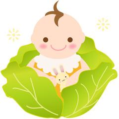 キャベツの赤ちゃん