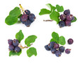 Set of forest berry blueberries