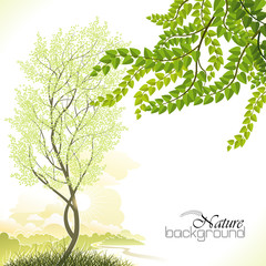 Tree  in Spring  Background