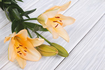 yellow lily flower with a bud on a background of a wooden table