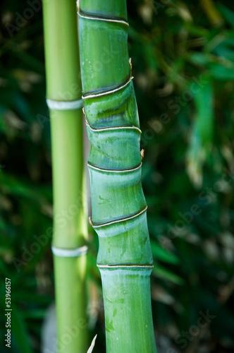 Bambous © pixarno