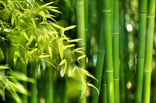 Bamboo forest - 53968302