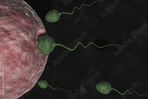 Sperm Cells Entering Human Egg.