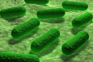 E coli Bacteria.