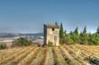 paysage provençal - buisson