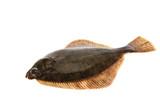 Fresh flounder, Live and freshly caught  Flounder poster