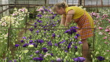 Woman working in a flower greenhouse