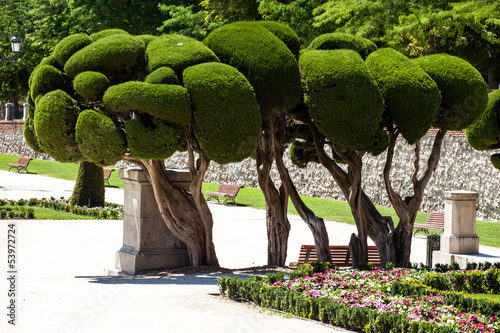 Outstanding cypress trees in Retiro Park in Madrid, Spain