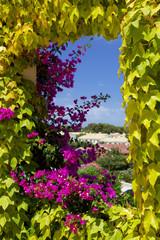 Finestra ricoperta di edera e fiori di petunia