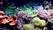 Coral and fish in aquarium