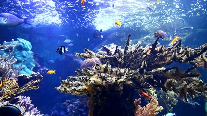 Coral and fish in aquarium