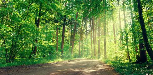 Waldweg © Sandra Knopp