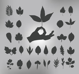 leafs. Vector illustration