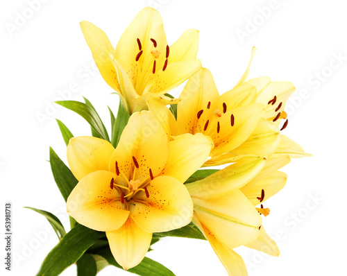 Beautiful orange lilies, isolated on white