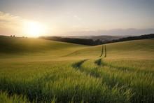 Obraz Letni krajobraz pola pszenicy o zachodzie słońca piękne l