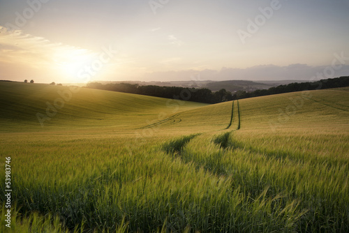Leinwandbild Motiv Summer landscape image of wheat field at sunset with beautiful l