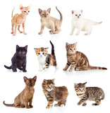 Different kittens collection - 53985546