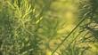 Растительный пейзаж