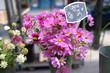 パリ、マルシェのお花屋さん