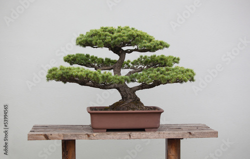 Fotobehang Bonsai bonsai plants