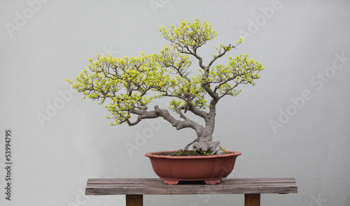 Aluminium Bonsai bonsai plants