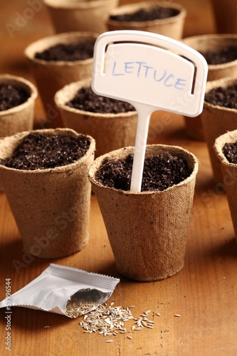 Close-up of lettuce seeds and planting pots