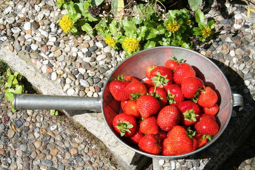 Swedish strawberries for Midsummer evening