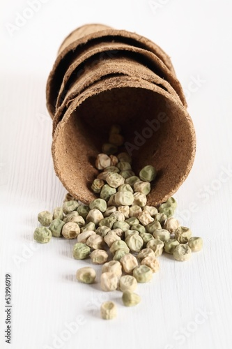 Close-up of peas seeds in planting pots