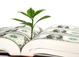 Leaf bud growing out of a book covered with dollars