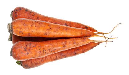 heap of fresh orange carrots
