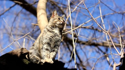 Cat sits on a tree and looking arround