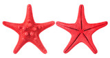 red starfish isolated on white background
