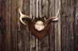 Horns on a wooden wall