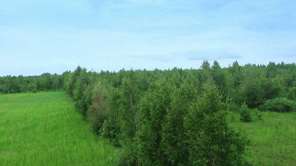 Pine tree forest aerial view. Shot from air balloon pov