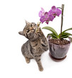 Cat with orchid, close up, isolated white background