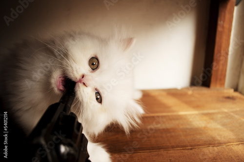 Kitten biting gun barrel