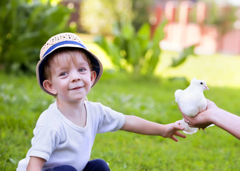 small boy and white dove
