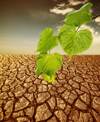 cracked dried soil and green plant - ecology concept