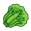 green Lettuce cartoon isolated  illustration